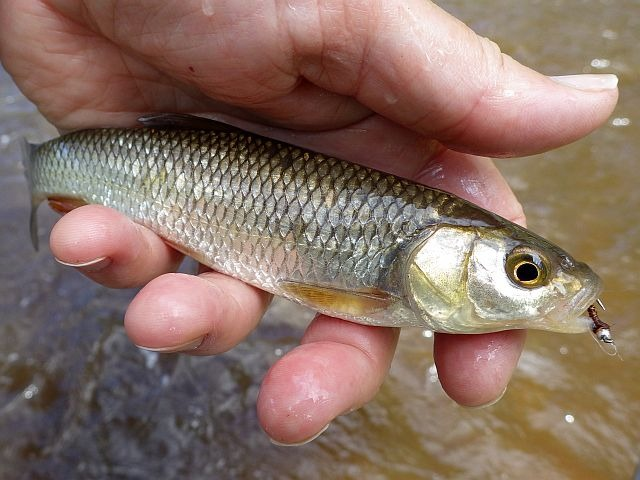 reportage pêche mouche sur l'Ance du Sud département de la Haute-Loire
