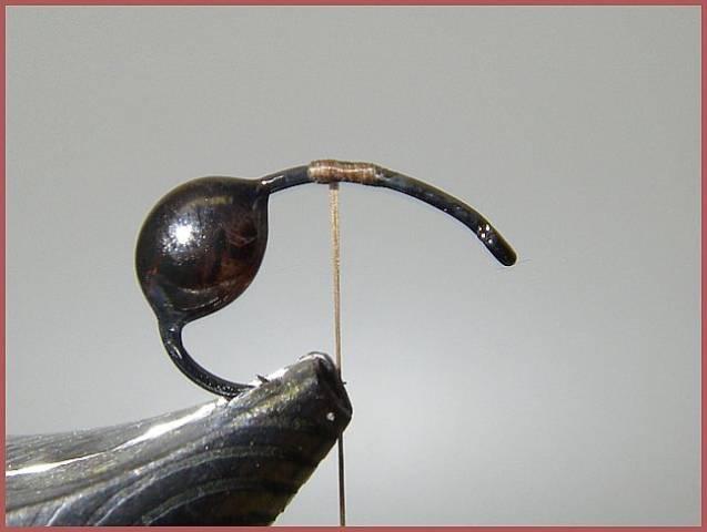 Avozetto les terrestres les fourmis foam et ailes pardo