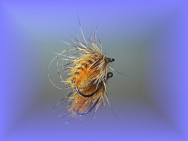 Avozetto webzine pêche mouche montage émergente
