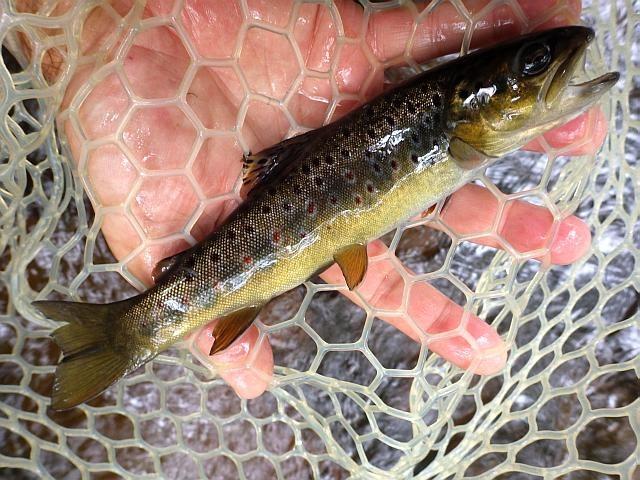 reportage pêche mouche france corrèze petite vézère