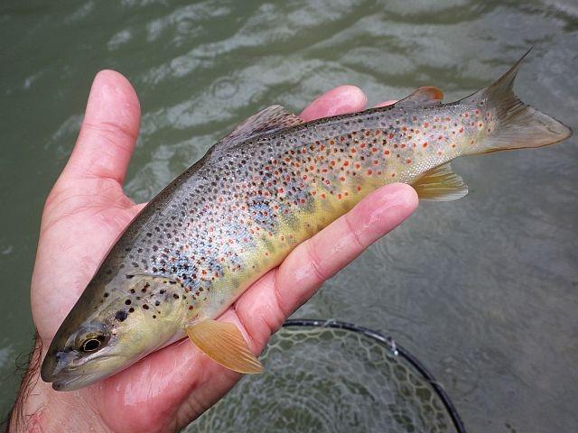 reportage risse haute savoie Avozetto webzine pêche mouche